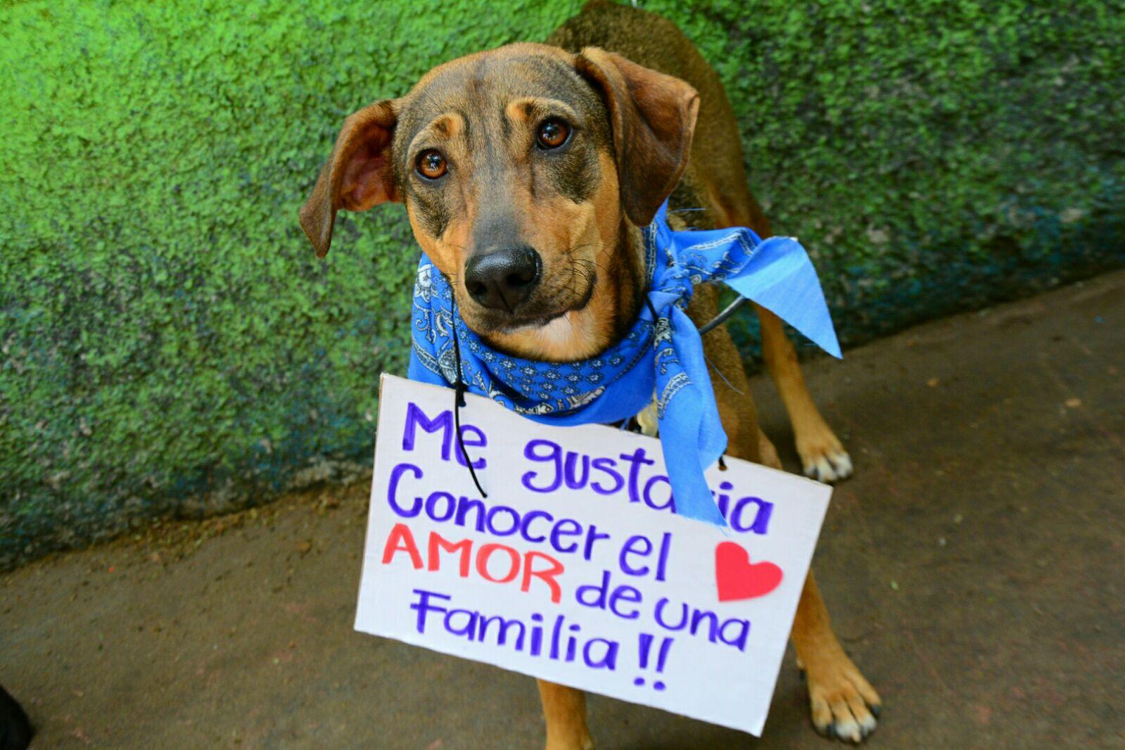 Adopciones y Esterilizaciones Caninas