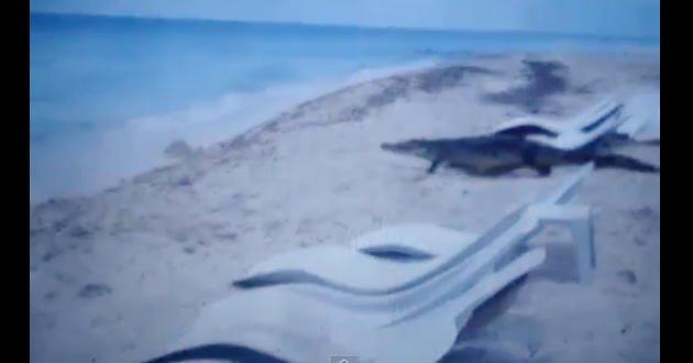Video-Captan-cocodrilo-2038545