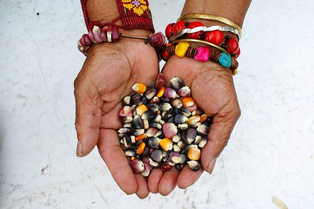 10 antojitos de maíz que todo mexicano ama