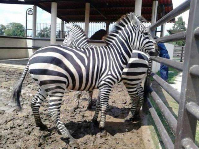 Clausuran y decomisan animales de parque Cuitláhuac en Iztapalapa