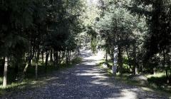 bosquecito-para-caminar-jpg