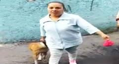 lady-pitbull