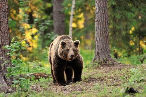 especies-de-osos.jpg