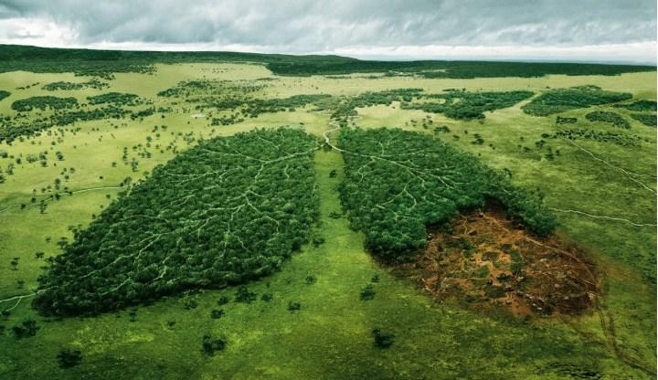 Leyes para cuidado de los bosques iniciaron hasta inicios del siglo XX