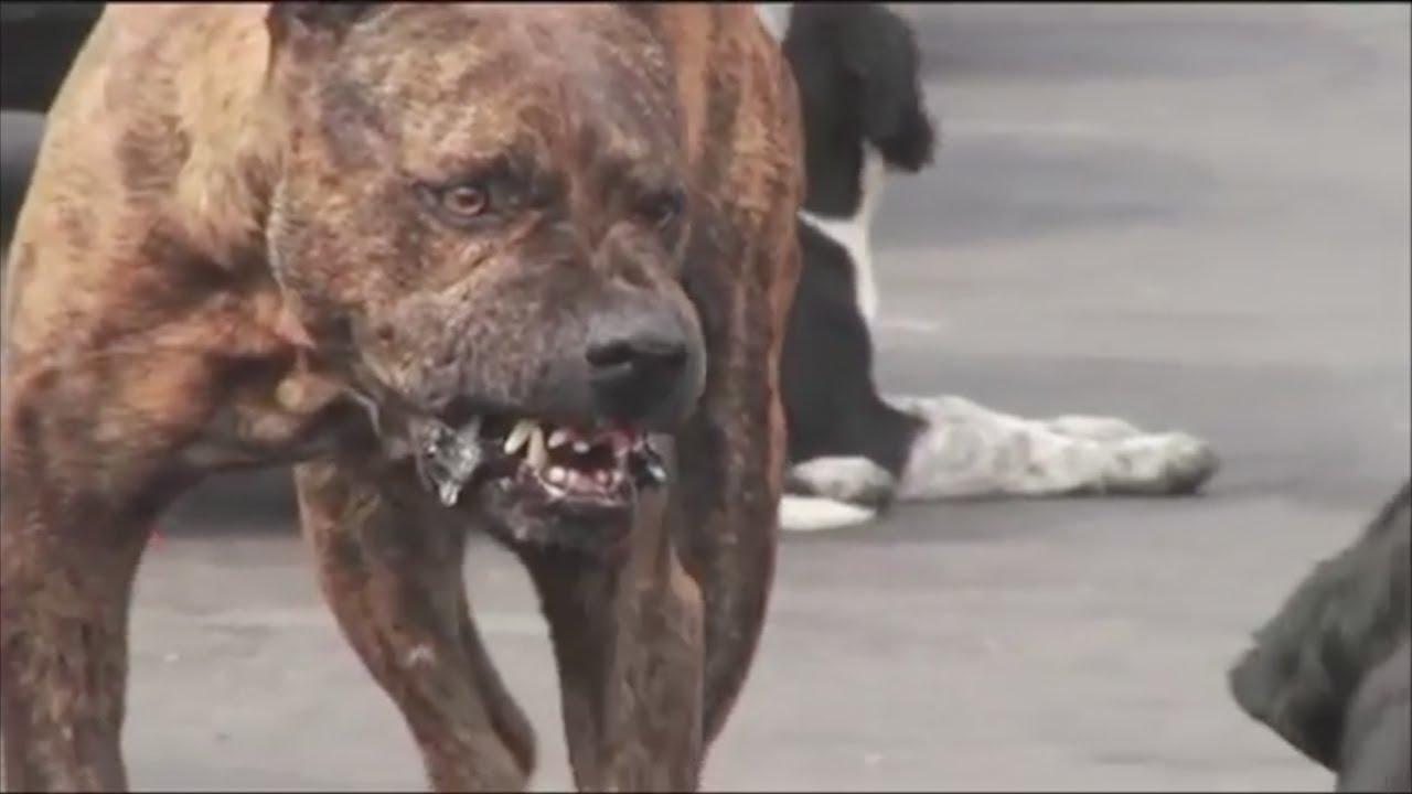 Bebé muere al ser atacado por perro salvaje