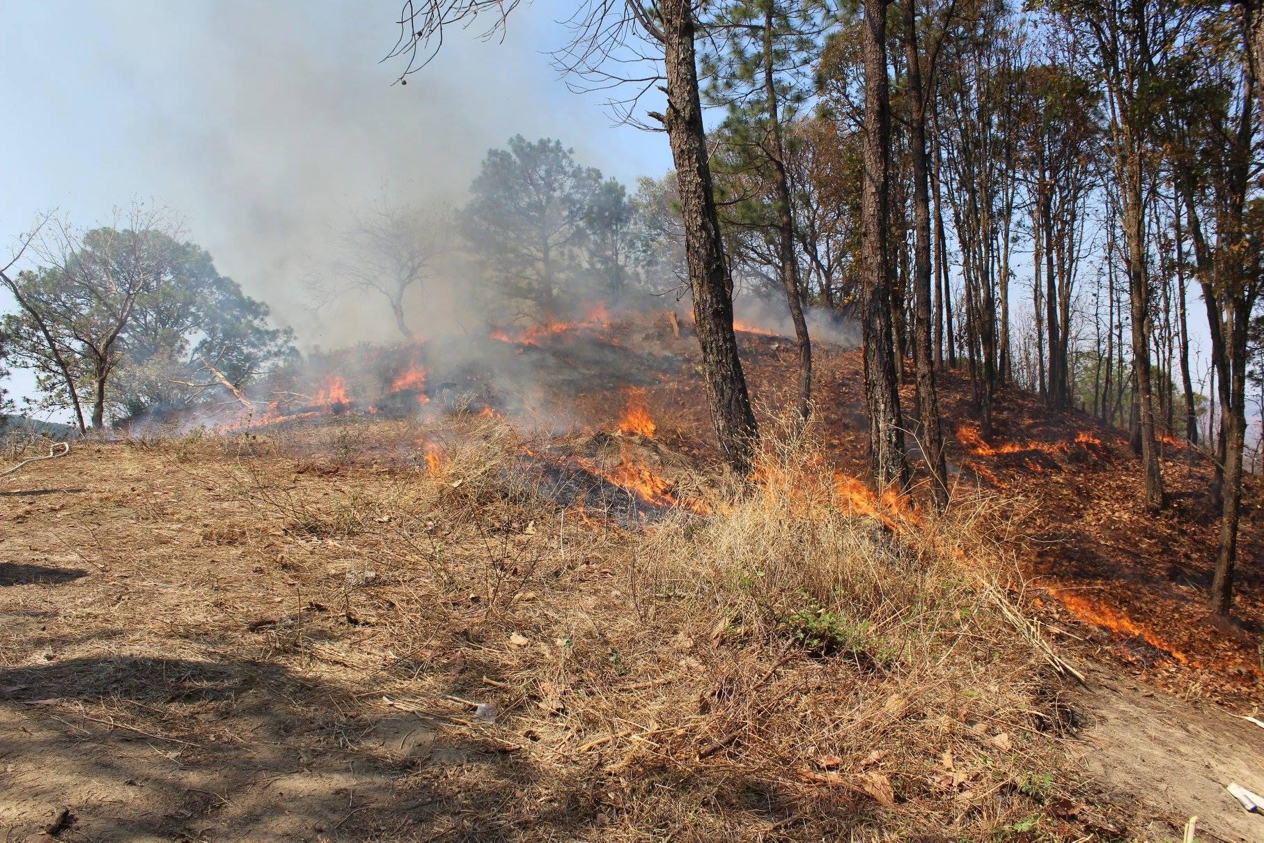 Avanza en Comisiones exhorto a municipios para crear brigadas contra incendios