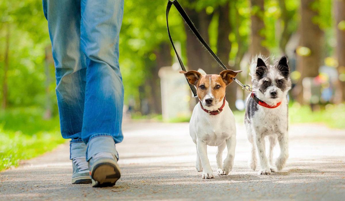 Ecatepec multará a quienes saquen a pasear a sus mascotas sin correa o no recogan sus heces